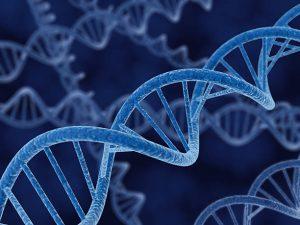Brin d'ADN au microscope électronique